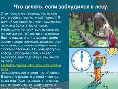 """""""Правила поведения в лесу""""  Памятка для детей!"""