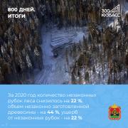 Леса Кузбасса