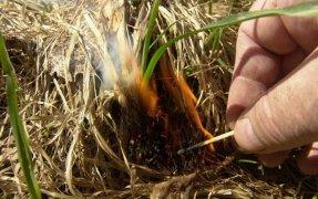 Внимание! Сухая трава.