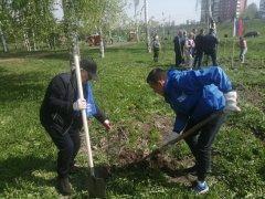 Посадки деревьев продолжаются