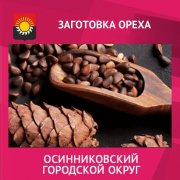 Жители Кузбасса смогут собирать кедровые шишки с 15 августа